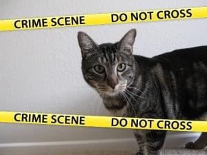 Cat Crime