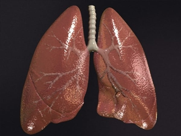 Real Lungs Related Keywords - Real Lungs Long Tail ...